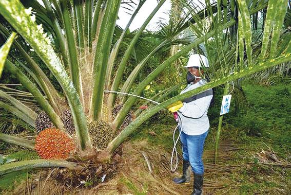 Sector palmero lideró campaña de prevención contra el Covid-19, mantuvo el empleo y reafirmó su solidaridad con las zonas palmeras